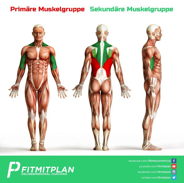 Latziehen zur Brust - Trainingsübung - Ausführung - Muskelgruppen - Small