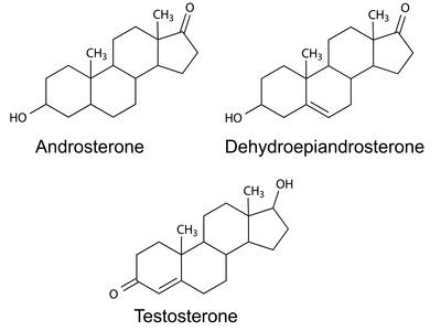 Testosteron Enantat - Die ungeschönte Wahrheit_Die Kanalisierung der Androgene